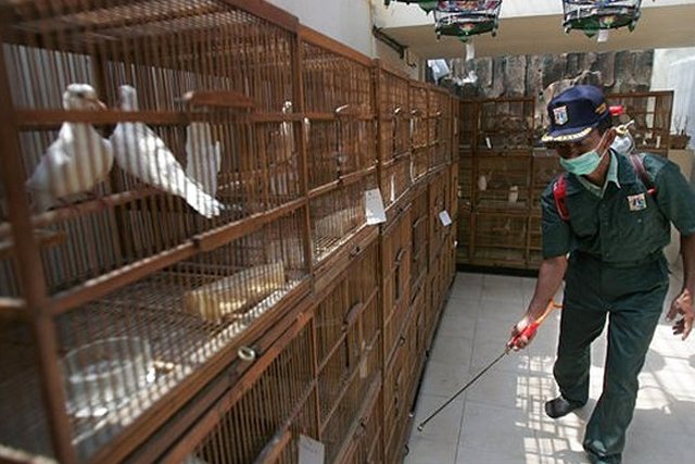 An Agriculture Ministry worker sprays disinfectant at cages at a bird farm in Jakarta, Indonesia, Monday, Sept. 26, 2005. (quiplash/flickr)