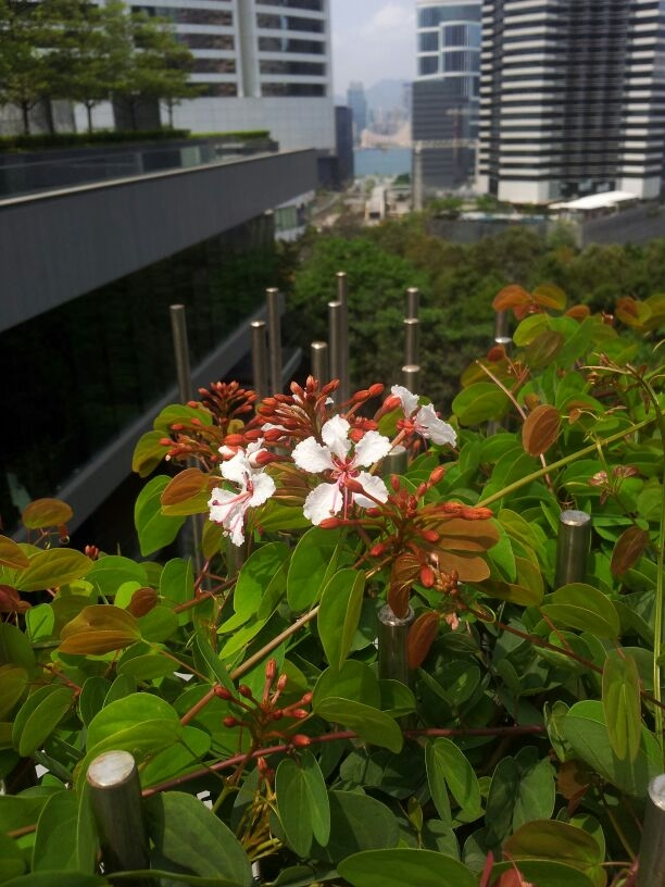Blossom on the rooftop (Photo by Jania Cheung)