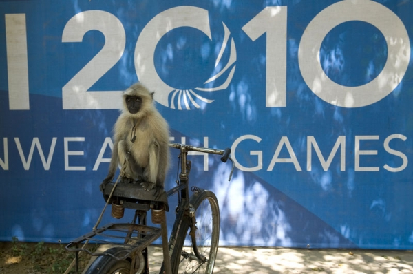 An Indian Langur monkey sits on his handlers cycle parked in front of a Commonwealth Games banner outside The Dhyan Chand National Stadium in New Delhi on September 29, 2010. (Manpreet Romana/AFP/Getty Images)
