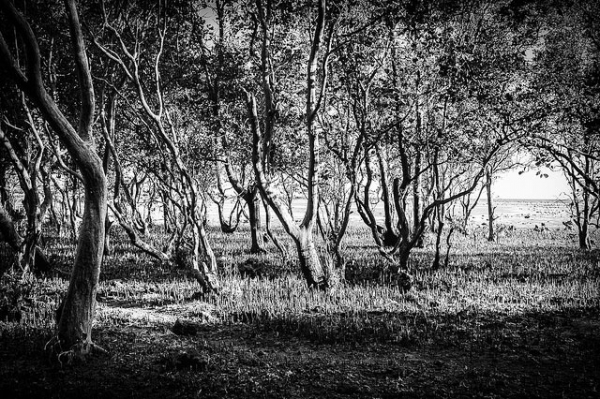 A dense grove of trees at Batangas Beach, Philippines on March 13, 2013. (jojo nicdao/Flickr)
