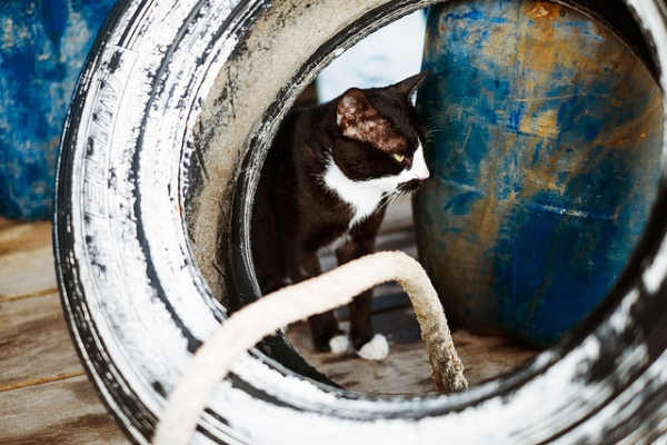 A cat quietly watches hidden between a barrel and a wheel in Koh Chang, Thailand on March 18, 2013. (mr. Wood/Flickr)