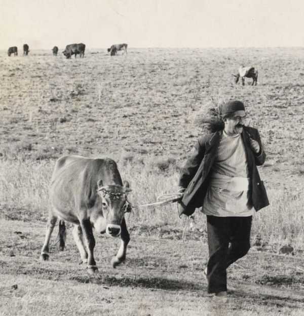 The Cow (Dariush Mehrjui, 1969) launches Asia Society's Iranian New Wave retrospective in New York on November 2, 2013.