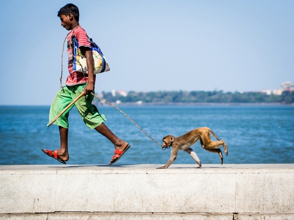 A young boy and his monkey walk along Marine Drive in Mumbai, India on March 1, 2014. (NEENAD ARUL/Flickr)