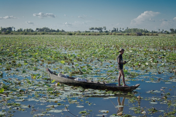 A man rows his way through a lotus flower lake in Phnom Krom, Cambodia on October 2, 2014. (Photasia/Flickr)