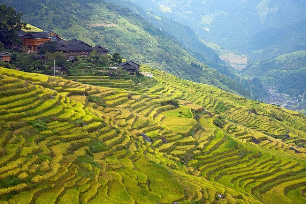 Sloping rice terraces take on different shades of green in Guangxi, China on September 25, 2014. (Dmitry Shakin/Flickr)