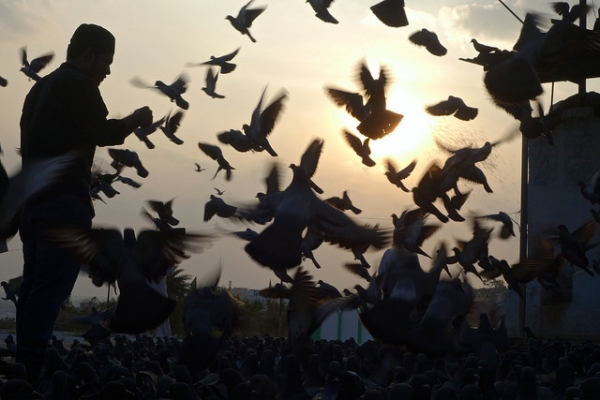 As the sun sets in the distance, a flock of birds fly around a man holding a bowl full of seeds in Hyderabad, India on December 12, 2015. (Rajesh_India/Flickr)