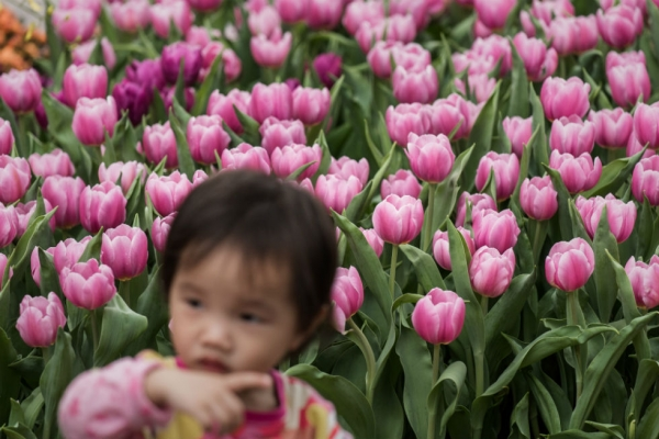 A child stands by flowers during the Hong Kong Flower Show 2015 in Hong Kong on March 20, 2015. (Philippe Lopez/AFP/Getty Images)
