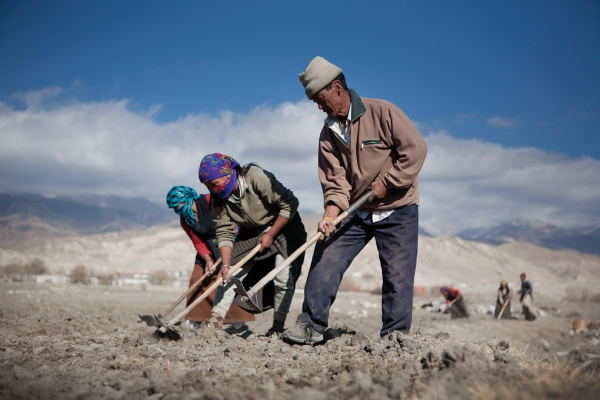 A group of Loba men gather in the fields outside of Lo Manthang during the planting season. (Taylor Weidman)