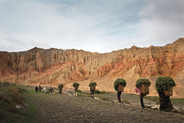 Dhakmar villagers return to the town after a day of working in the fields. (Taylor Weidman)