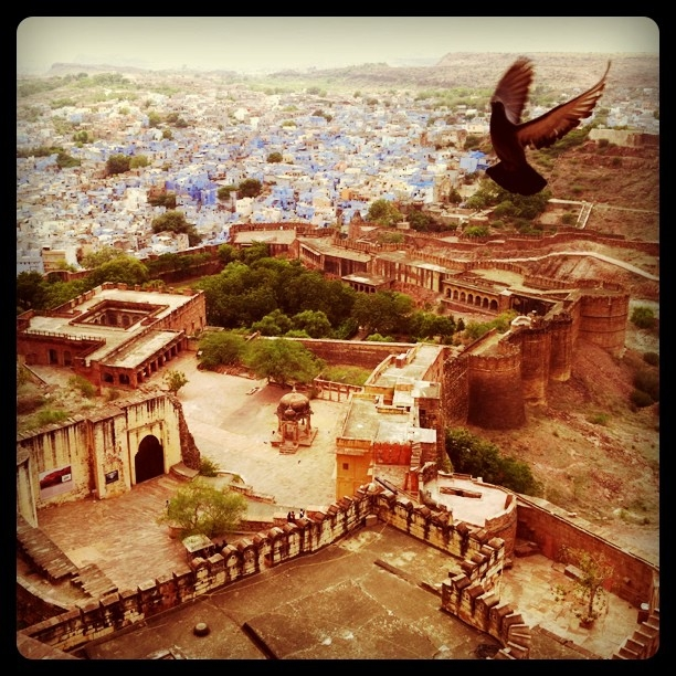 """I took this from the fort in Jodhpur, India, intending for it to just be a landscape of the old blue city — but the bird flying into my frame was perfect, and made this my favorite photo of all the ones I took when I was in India."" (Pei Ketron)"