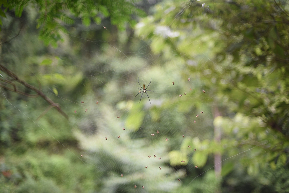 A spider makes its web along the Rangcha trail, near the Bimire wetlands. (Nirman Shrestha)