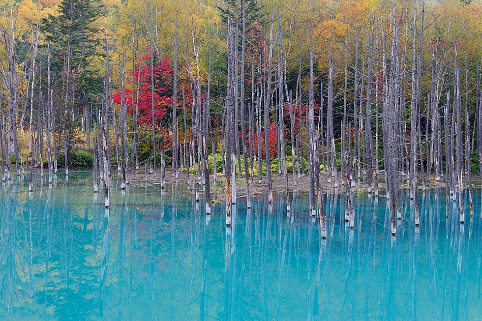 """Blue Pond and Autumnal Leaves in October."" (Kent Shiraishi)"