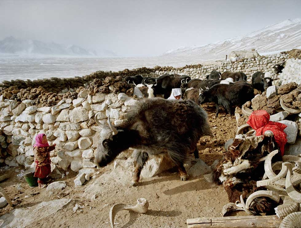 While the herd is taken out, two young girls hide from a yak. This beast can weigh up to one ton. (Matthieu Paley)