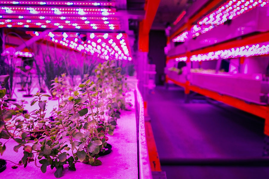 Daie - Vertical farm under UV