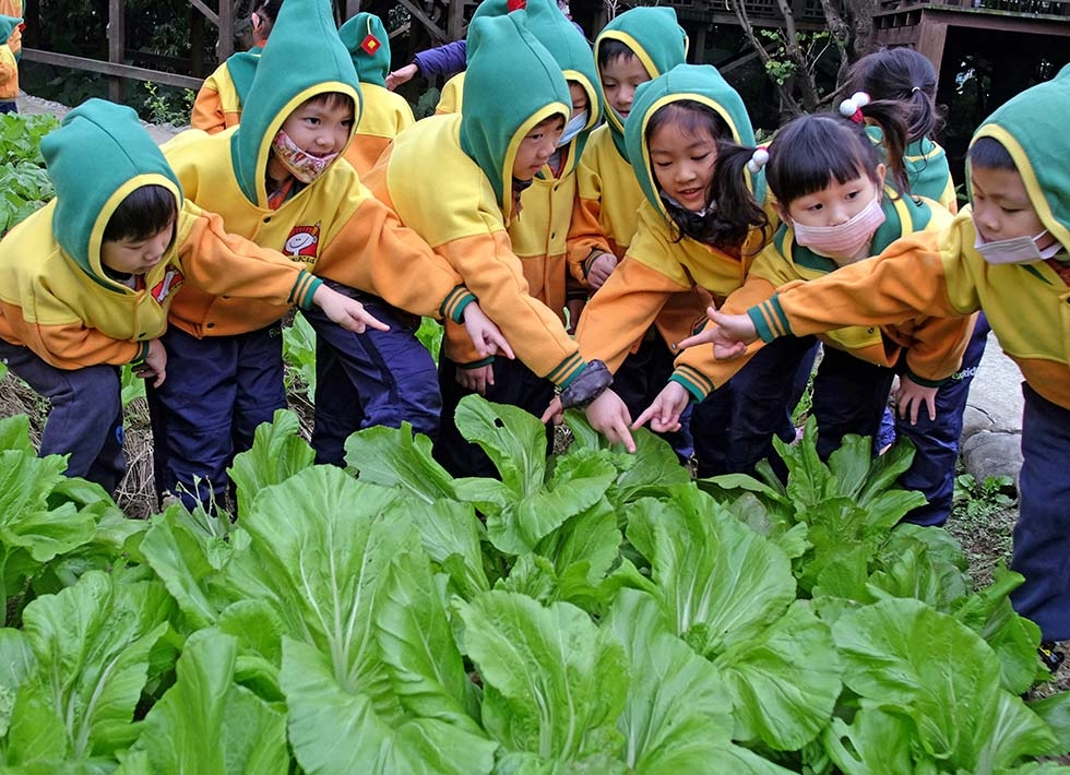 Children learn how to make traditional pickled vegetables during a Hakka Lunar New Year celebration on January 21, 2014 in Taipei, Taiwan. (Sam Yeh/AFP/Getty Images)