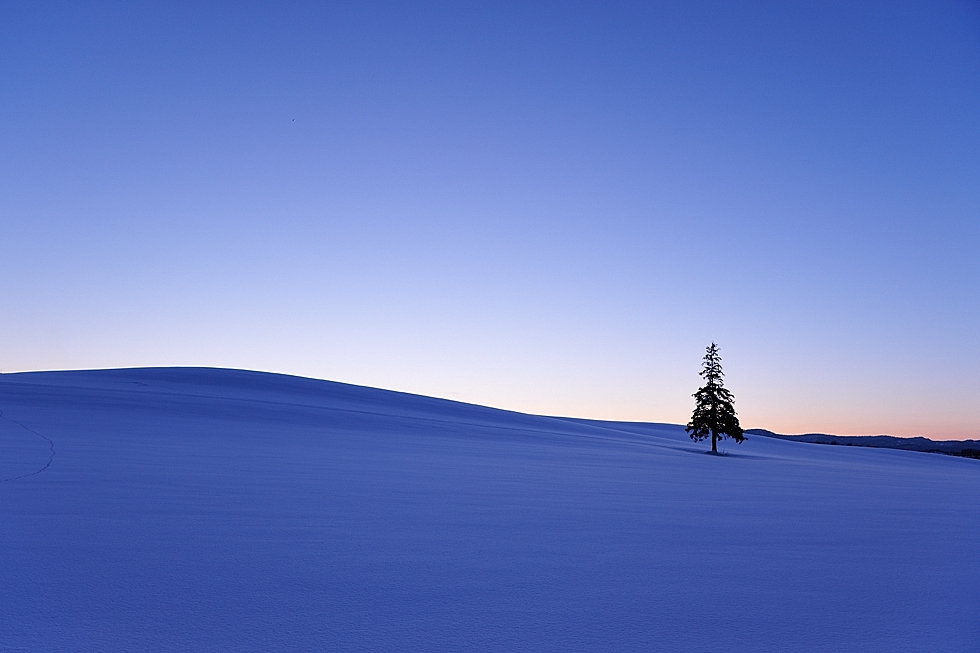 """One Tree in Blue Moment."" (Kent Shiraishi)"
