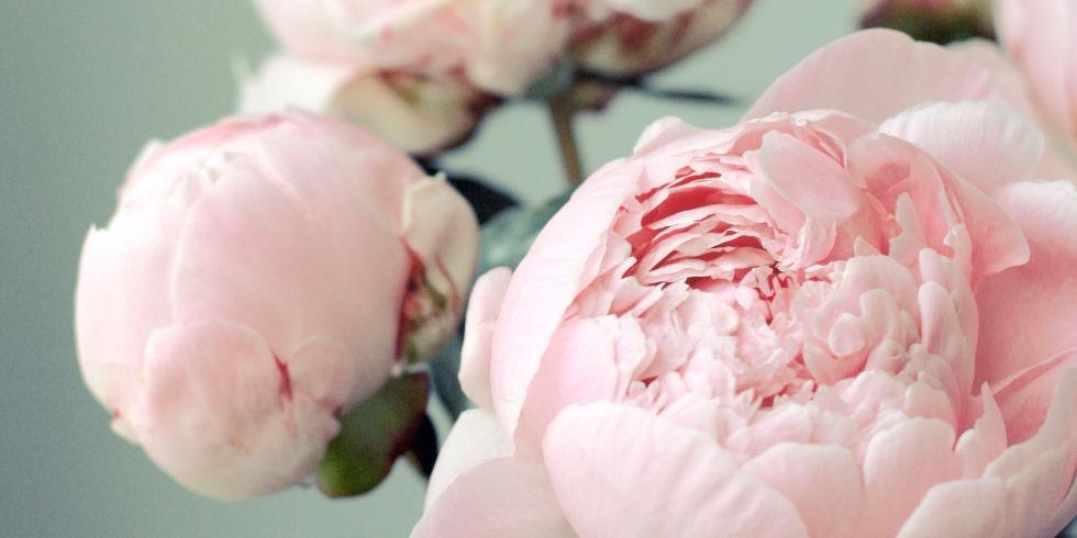 Romantic gifts- Peonies