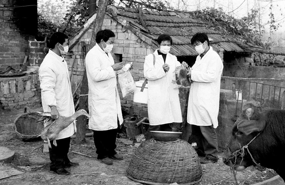 Chinese veterinarians inoculate thousands of birds with the same needle containing anti-Bird Flu serum in Anhui Province. (Ryan Pyle)