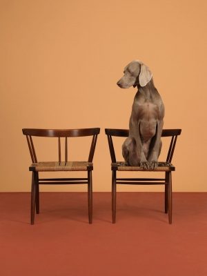 One On, Limited Edition Print by William Wegman