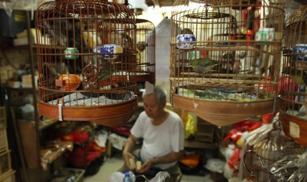 Bird cages hang above a man in his stall at a bird market in Hong Kong on November 18, 2010.