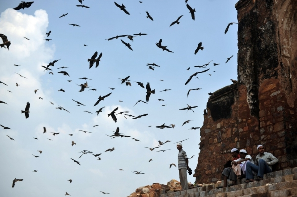 Indian Muslims take a break as birds fly around Firoz Shah Kotla Masjid after prayers on the first Friday of Ramadan in New Delhi on August 13, 2010. (Pedro Ugarte/AFP/Getty Images)