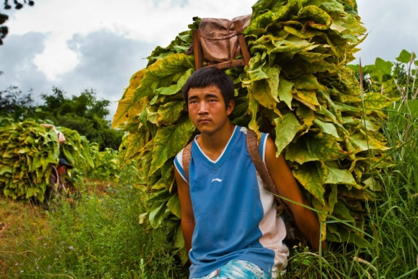 Trainee Miao Yunfei working in his family's tobacco fields in rural Sichuan. (EyeSteelFilm)
