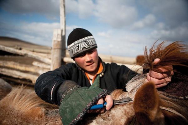 A young herder trims the manes from a herd of horses. The horsehair is commonly used to make rope. (Taylor Weidman)