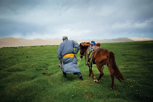 A herder leads his horse home from a watering hole in a Gobi Desert oasis. (Taylor Weidman)