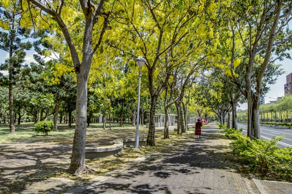 An early morning promenade under a canopy of ginko trees in Tainan City, Taiwan on May 31, 2012. (Yu-Jen Shih/Flickr)