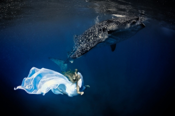 Underwater model Hannah Fraser poses in long flowing fabrics with a magnificent whale shark in Oslob, Philippines in November 2012. (Shawn Heinrichs/Blue Sphere Media)