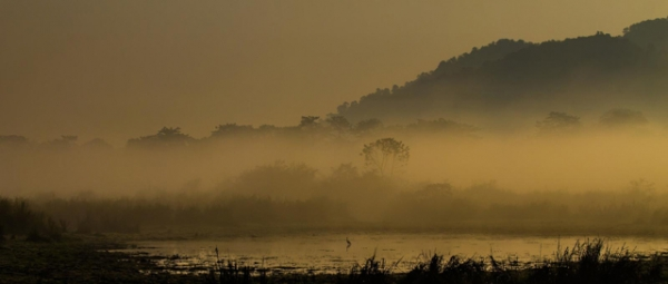 Scenic Kaziranga shrouded in mist in Assam, India on March 5, 2013. (Roon Bhuyan)