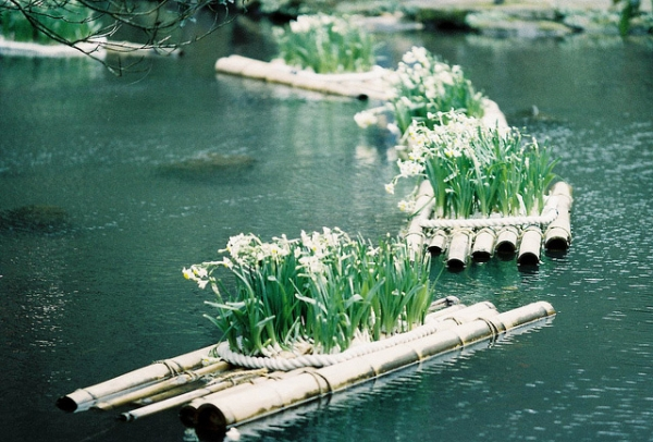 White blooms stand neatly on floating bamboo rafts in Taipei City, Taiwan on April 1, 2013. (billlushana1/Flickr)