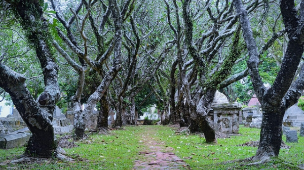 This canopy of trees provides a quiet sanctuary for the Old Protestant Cemetery in the bustling city of George Town, Penang, Malaysia on November 9, 2013. (Jiří 伊日/Flickr)