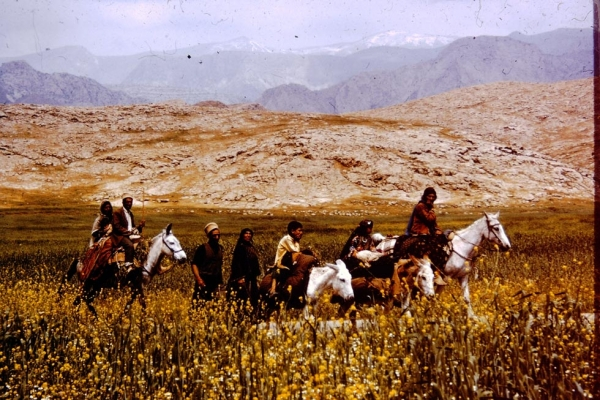 Nomads on the move with their entire household and their animals on a spring route.