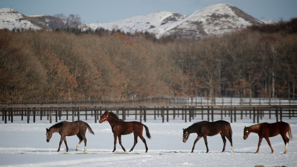 A line of horses follow each other out for a stroll in Abira, Japan on March 2, 2014. (MIKI Yoshihito/Flickr)