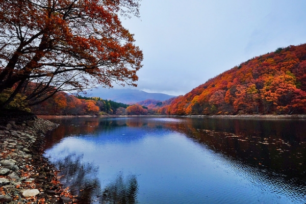 Leaves in every shade of fall colors line trees along the water in Sendai, Japan on November 9, 2014. (Genie09/Flickr)