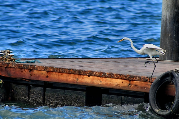 A bird prepares to fly off from a dock by the water in Sabah, Malaysia on October 13, 2015. (Phalinn Ooi/Flickr)