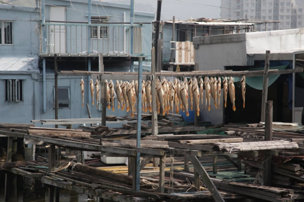 Rows and rows of fish are hung to dry in the sun in the fishing town of Tai O, Hong Kong on November 22, 2015. (Tahiat Mahboob)