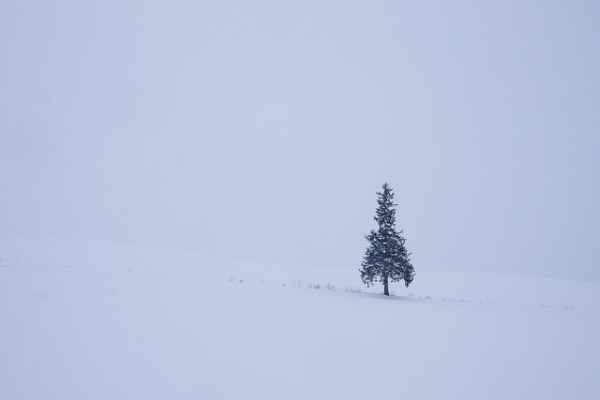 A lone tree in a landscape blanketed by snow in Hokkaido, Japan on December 7, 2015. (Soumei Baba/Flickr)