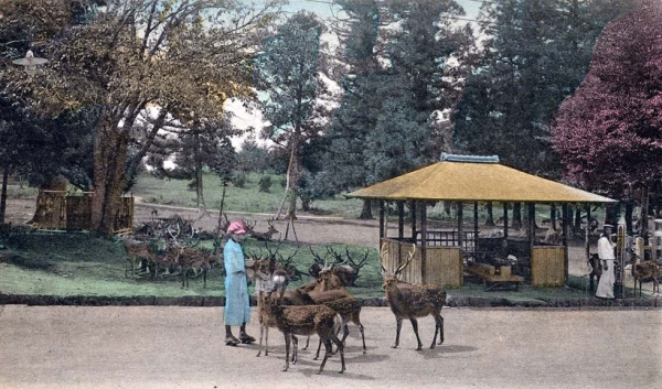 """Nara Park, Nara."" 1901-1907. (New York Public Library)"
