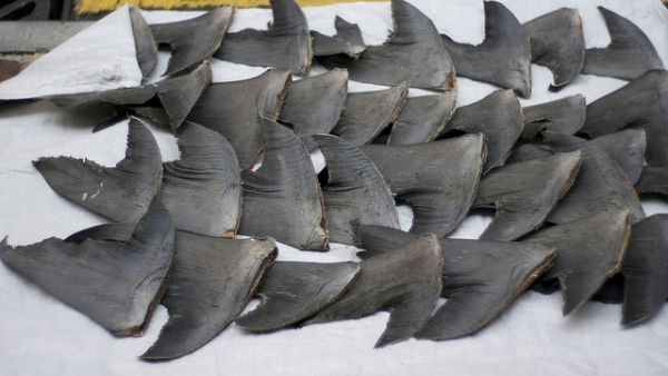 Fresh shark fins drying on sidewalk in Hong Kong on September 27, 2011. (cloneofsnake/Flickr)