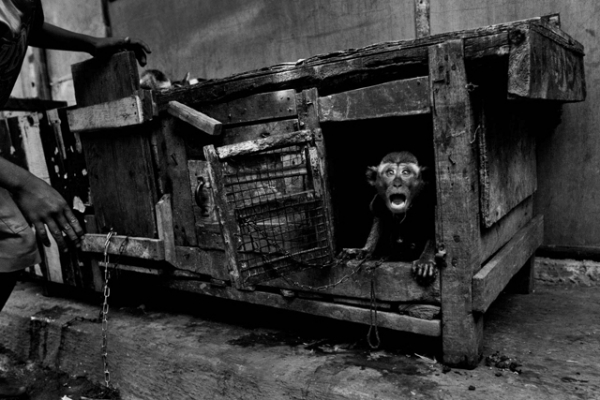 A performing monkey in Jakarta. (Ed Wray)