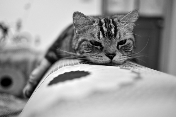 A photographer captured his cat in a quiet moment in Taipei, Taiwan on June 3, 2012. (今 ゆっくりと 歩いていこう/Flickr)