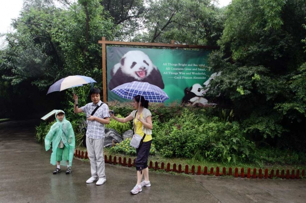 Visitors to the Giant Panda Breeding Centre in Chengdu, China in  2011. (Sean Gallagher)