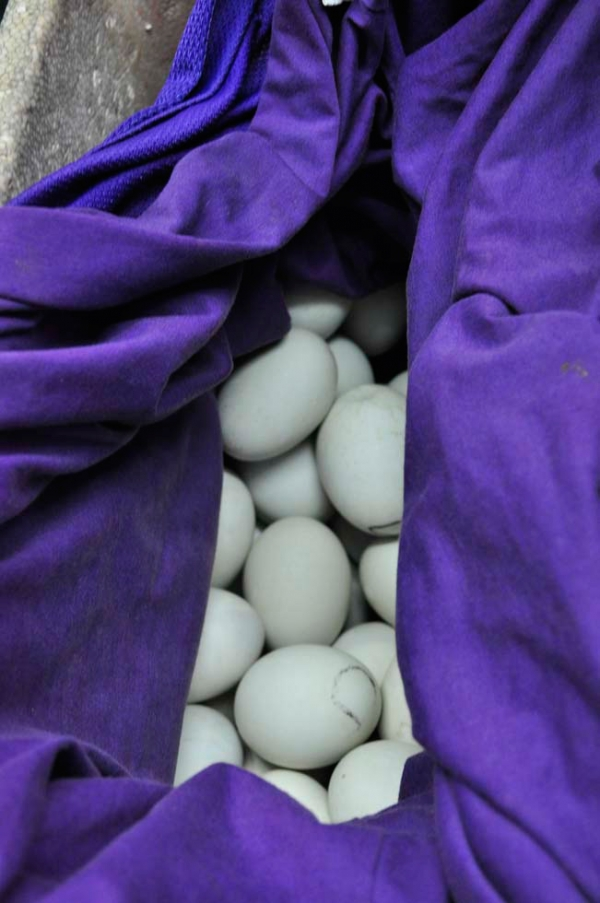 Balut, a duck embryo that is boiled and eaten in the shell, from the Philippines. (Ayie Zerrudo)