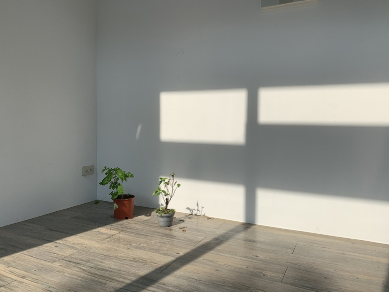 Two potted plants rest on the floor in the corner of an otherwise bare room. Sunlight streaming through windows falls across the floor and one of the walls.
